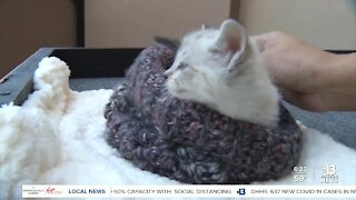 Pet of the week: kitten found in apartment attic