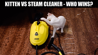 Cat unsure of steam cleaner, deems it mortal enemy - Video