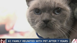 KC family reunited with cat seven years later - Video