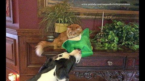 Festive Great Dane steals cat's shamrock hat