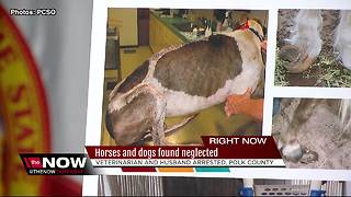 Veterinarian and her husband arrested for Felony Animal Cruelty in Polk County - Video
