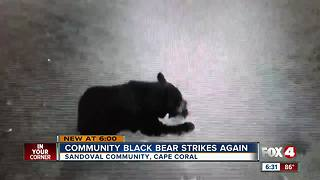 Sandoval Bear Strikes Again - Video