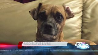 Deputies find missing dog after wreck - Video