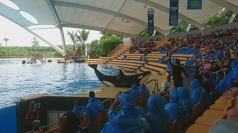 An impressive and fun Orca's show in Loro parque