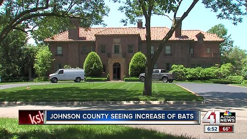 Bats: The uninvited guests in Johnson County homes