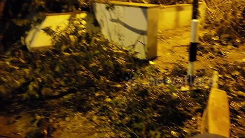 """City termed """"Jurassic Hong Kong"""" as trees lie uprooted following typhoon"""