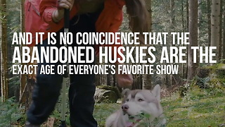 Huskies Are Being Abandoned Because of Game of Thrones