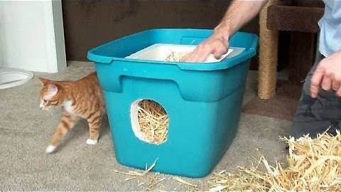 How To Make A Shelter For Your Neighborhood Cats