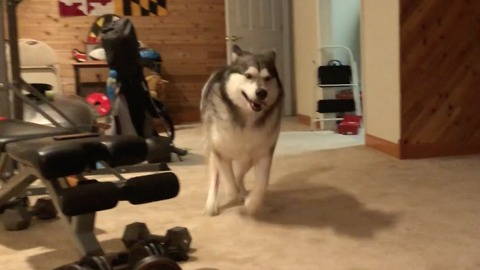 Dog ecstatic about playtime in the basement