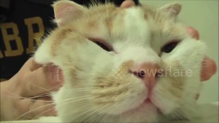 Cat loves face massage - Video