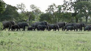 Huge herd of around 70 elephants spotted in Kruger National park leaves wildlife photographer gobsmacked - Video