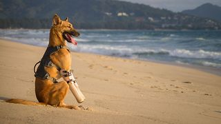 Abused dog now lives happy life, enjoys beach time - Video