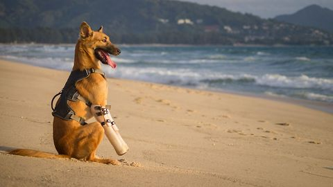 Abused dog now lives happy life, enjoys beach time