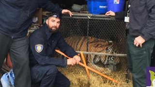 Someone Broke Into A House To Smoke Weed and Found A Tiger