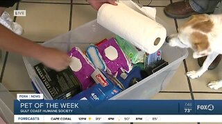 Pet of the week and hurricane emergency kit at GCHS