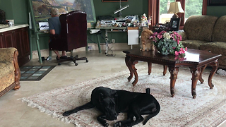 Great Dane and Cat Relax in Art Studio With Wind River Canyon Painting