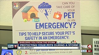 Protecting your pets during a storm