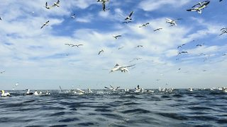 Hundreds of birds shock passersby as they suddenly dart into the waters below - Video