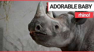 Adorable pictures and video of baby rhino