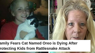 Family Fears Cat Named Oreo is Dying After Attacked Protecting Kids from Rattlesnake - Video