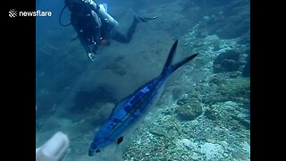 Diver Rescues Tiny Fish Stuck Inside Plastic Bag!  - Video