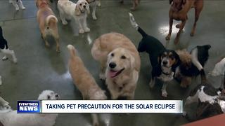 Pet Safety during Solar Eclipse - Video