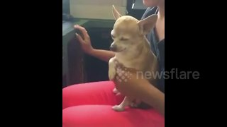 Dog won't let owner stop petting it