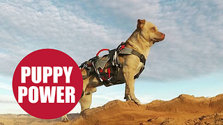 Adrenaline Seeker Throws Himself Off 400ft Cliff With His Dog - Video