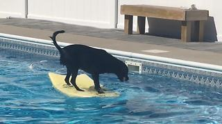 Dog balances on bodyboard to fetch ball in pool - Video