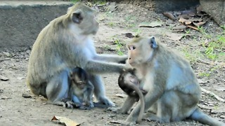 Monkey Problem Real Life Of Monkey Forest Temple