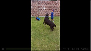 Playful Dog Intercepts Little Boy's Baseball Pitch