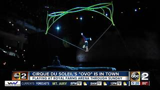 Cirque du Soleil's OVO show is in town - Video
