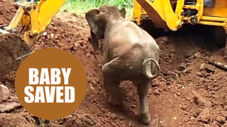 A baby elephant was saved from a well in India - Video