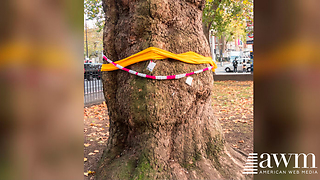 If You Ever See A Scarf Tied Around A Tree, Here's The Reason For It