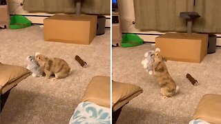 Adorable Bunny Is Best Friends With Stuffed Bunny
