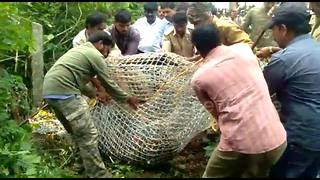 Trapped leopard tries to attack rescue official - Video
