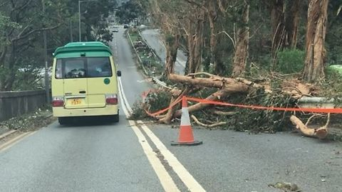 Fallen Trees Lie Strewn About Sai Kung in Typhoon Aftermath