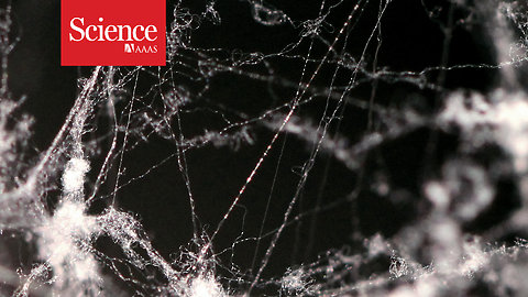 Spider silk is five times stronger than steel—now scientists know why