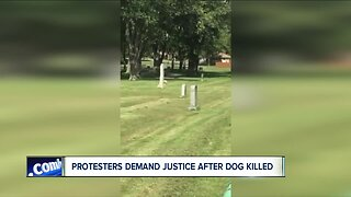 Protesters demand justice after dog killed
