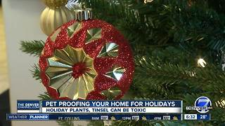 Pet proofing your home for the holidays