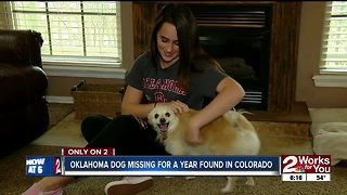 Oklahoma Dog missing for a year found in Colorado - Video