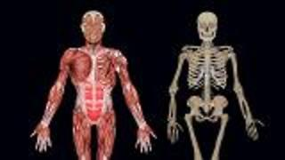 What Is The Musculoskeletal System? - Video