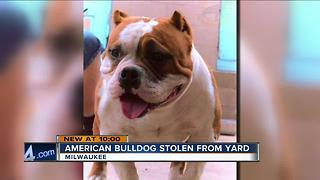 Milwaukee family's dog stolen out of their yard - Video
