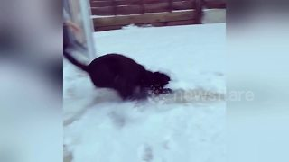 Amusing moment dog experiences snow for the first time - Video