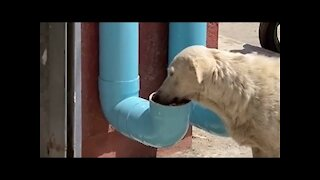 Man Created Water And Food Dispensers For Homeless Dogs