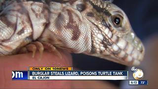 Burglar steals lizard, poisons turtle tank - Video