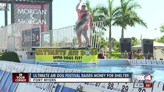 Air Dogs festival raise money for animal shelter - Video