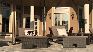 Great Dane puppy relaxes on patio lounger