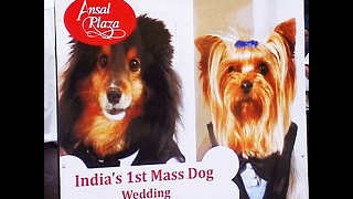 Mass Doggy Wedding - Video