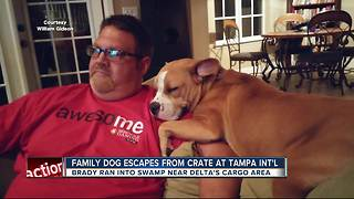 Dog missing after escaping onto tarmac at Tampa International Airport - Video